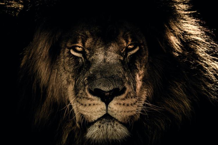 Leeuw Kop